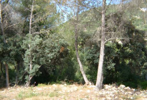 Plot - Resale - Alcalali - Alcalali